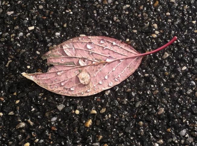 Last fall's leaf