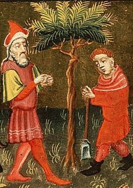 """Of Fig Trees and Second Chances"""" A Sermon on Luke 13:6-9 